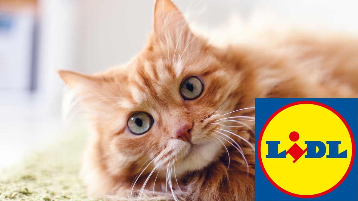 Découvrez ce nouvel article Lidl vendu à bas prix qui va faire plaisir à votre chat