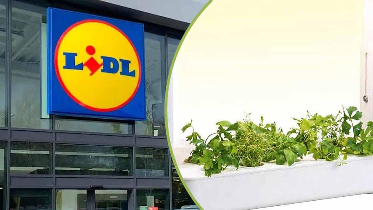 Lidl : ce set de jardinage d'intérieur commercialisé par la marque allemande fait un succès fou