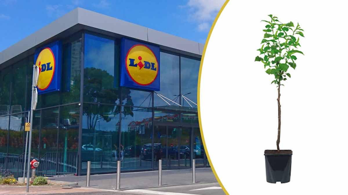 Arbre Fruitier en promotion chez Lidl : parfait pour orner votre extérieur !
